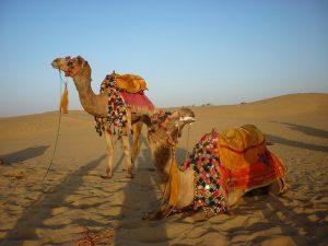 promenade-a-dos-de-chameau-dans-le-desert-de-manvaar